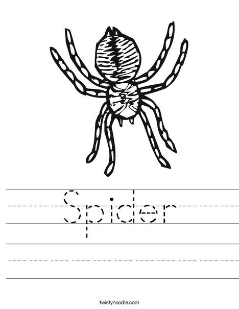 Spider Worksheet