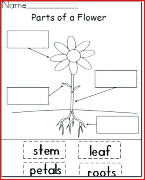 Parts Of A Plant Worksheets – Odmartlifestyle Com