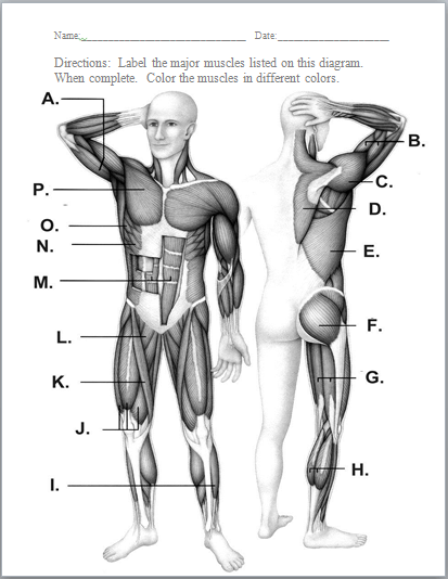 Label The Muscles Worksheet