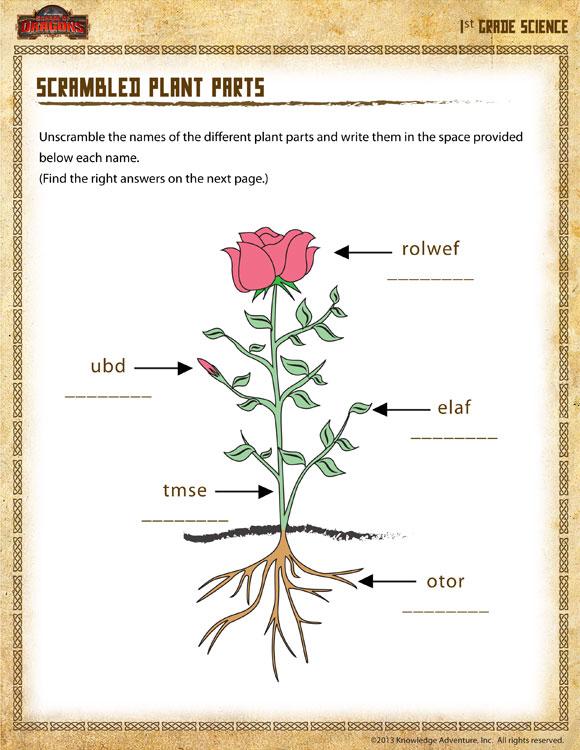 Scrambled Plant Parts View – 1st Grade Science Worksheet